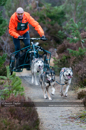 Class E dog sled racing team
